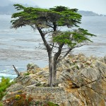 Lone Cypress Letdown in Pebble Beach, California