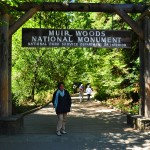 Finding Ghosts and Giants at Muir Woods National Monument